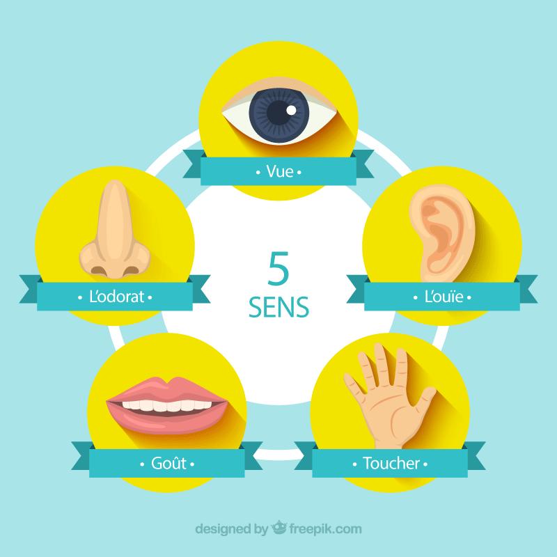 Les 5 sens ne sont pas tous présents sur internet lors d'un achat en ligne